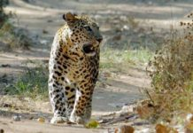 Kumbhalgarh Wildlife Sanctuary 1